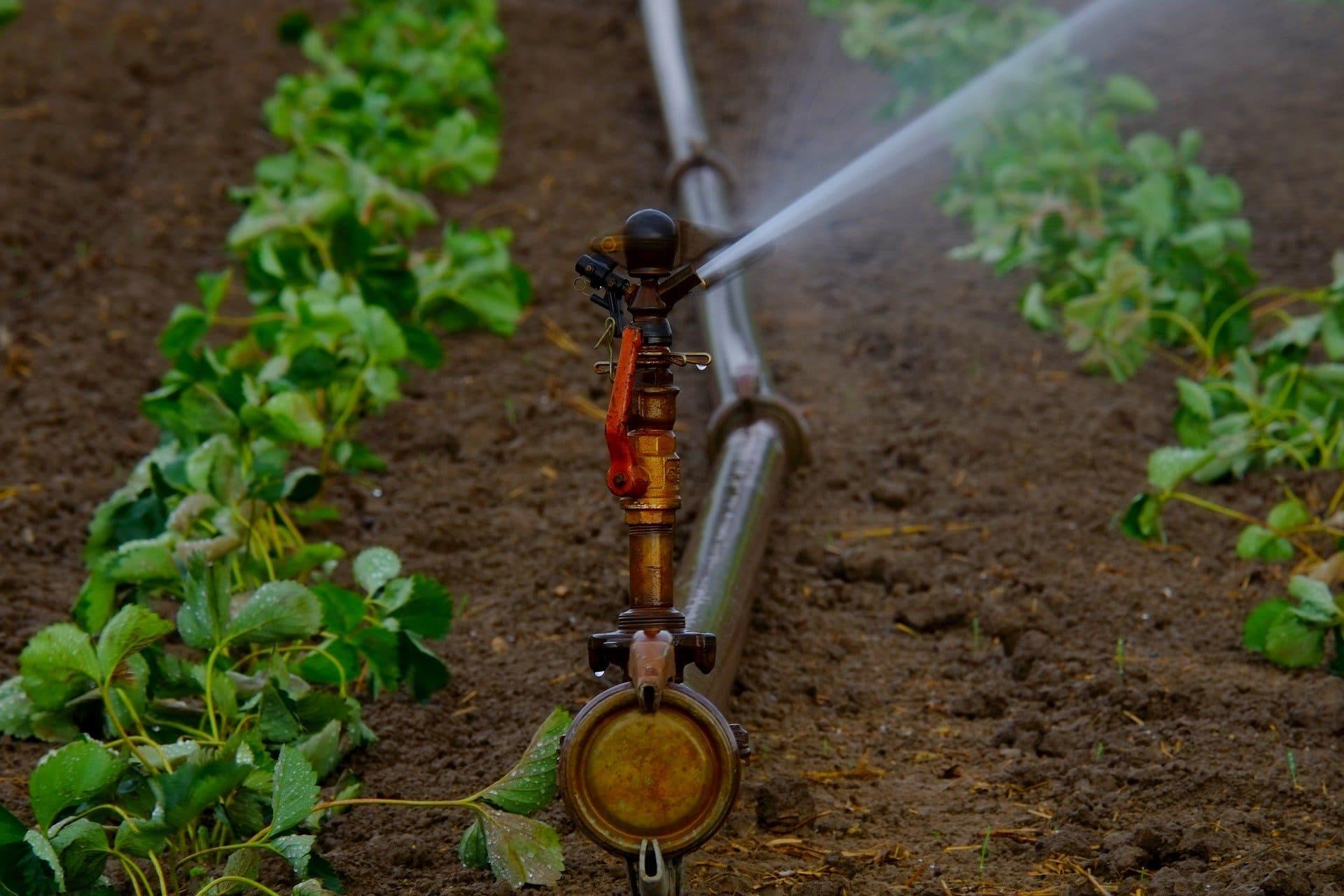irrigation-plante-goutte-à-goutte-algerie.jpg