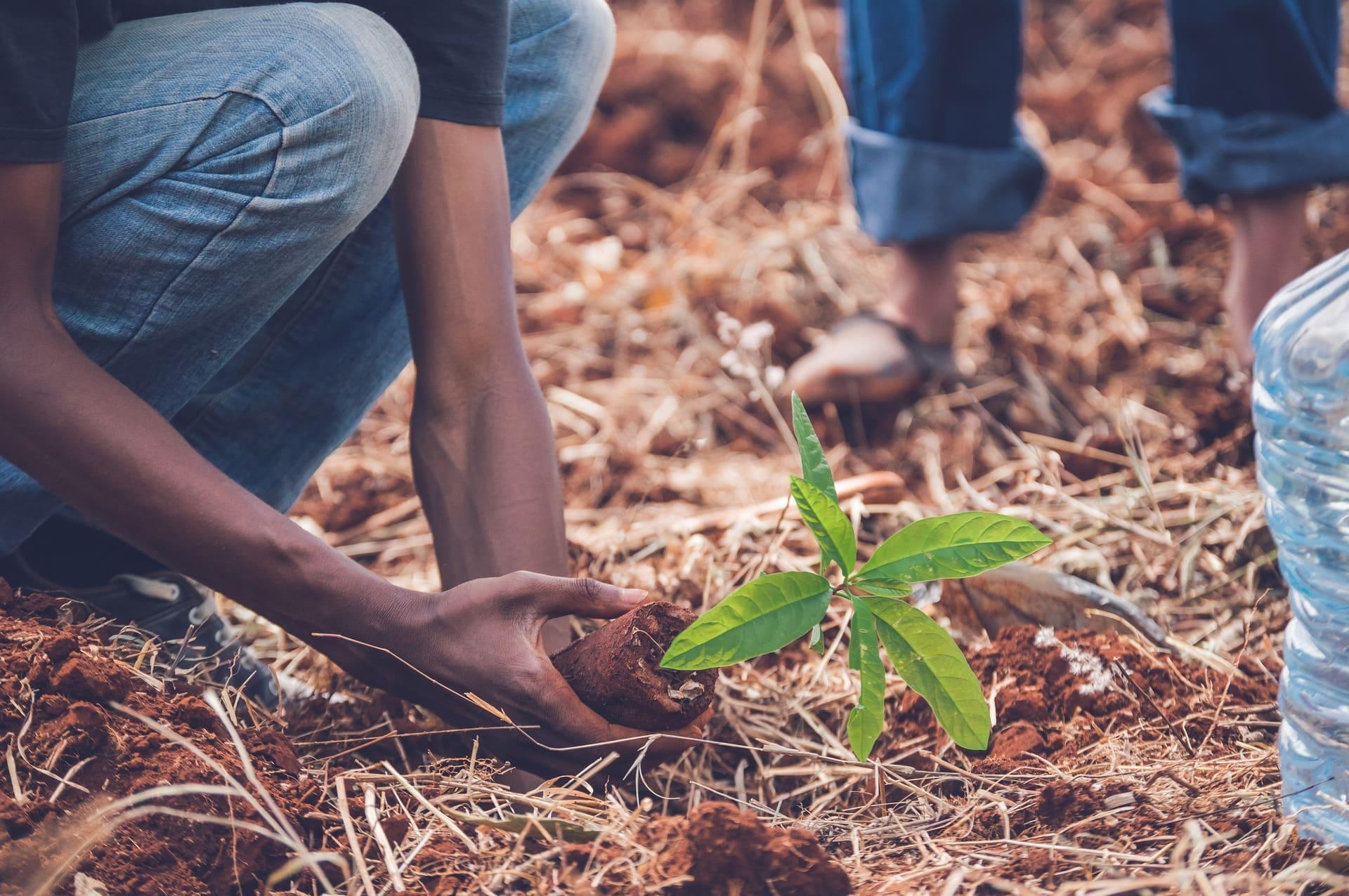 plantation-services-agricoles.jpg