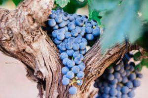 produits-de-la-vigne.jpg